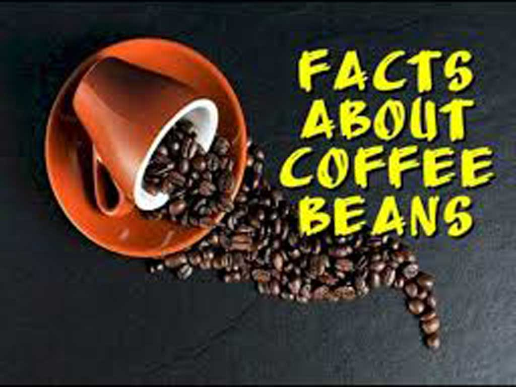 Facts about coffee beans